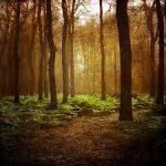 姿勢改善は木も森も見よ