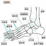【足】足首を柔らかくする為の絶対条件
