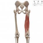 【姿勢】ストレッチの伸ばしすぎによる身体の影響と解決方法(例 ハムストリングス)